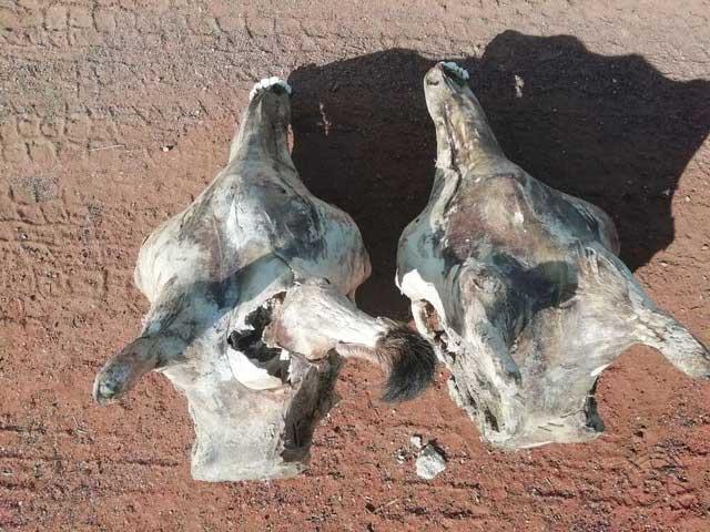 Hươu cao cổ có bị sét đánh nhiều hơn các loài động vật khác không?