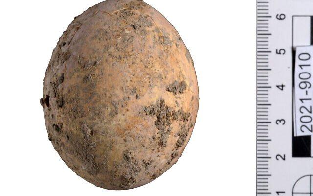 Israel phát hiện quả trứng gà 1.000 năm tuổi còn nguyên vẹn