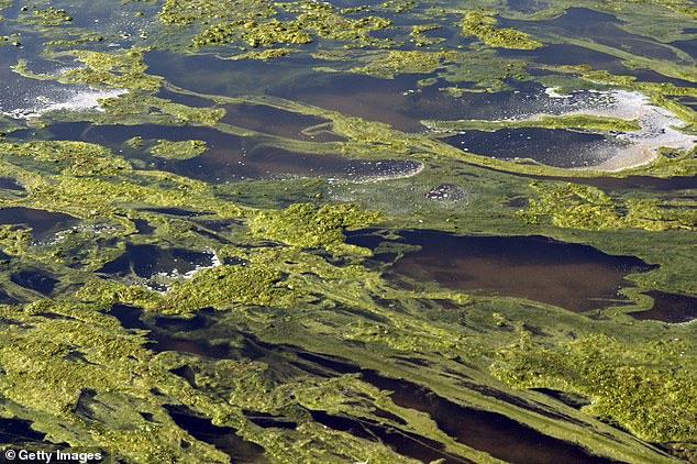Kế hoạch 50 nghìn tỷ USD biến sa mạc Trái đất thành hàng triệu ốc đảo