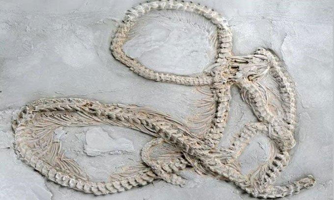 Khai quật hóa thạch trăn cổ nhất thế giới