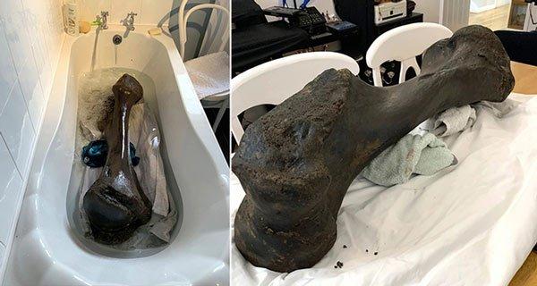 Khai quật khúc xương hóa thạch nặng 30 kg của voi tiền sử