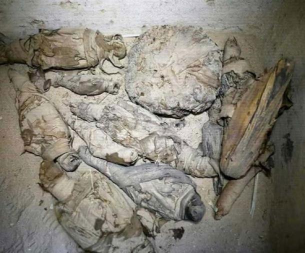 Khai quật mộ cổ Ai Cập 2.500 năm tuổi, bất ngờ phát hiện bên trong chứa hàng chục xác ướp mèo