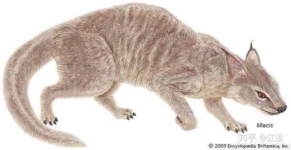 Khám phá khảo cổ mới cho thấy chó và mèo trước đây có chung một tổ tiên