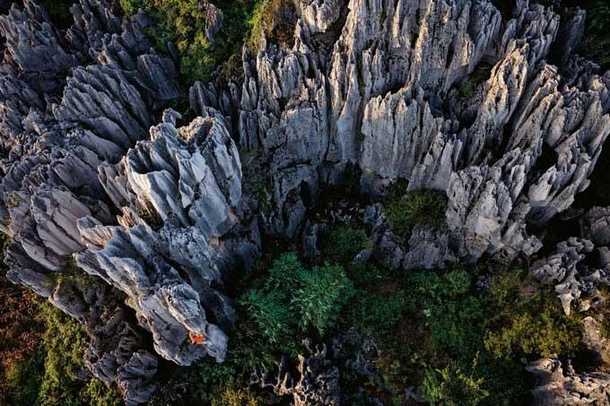 Khám phá rừng đá 270 triệu năm tuổi