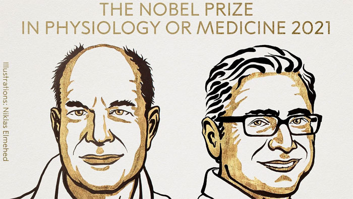 Khám phá về nhiệt độ và xúc giác giành giải Nobel Y Sinh 2021