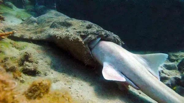 Khi cá mập tiến hóa để sống dưới đáy biển, chúng sẽ như thế nào?