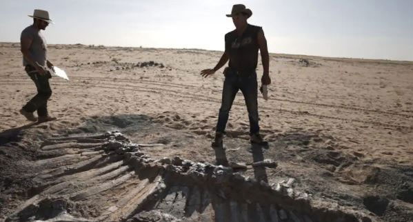 Kho tàng xương khủng long mắc kẹt ở sa mạc Sahara vì dịch Covid-19
