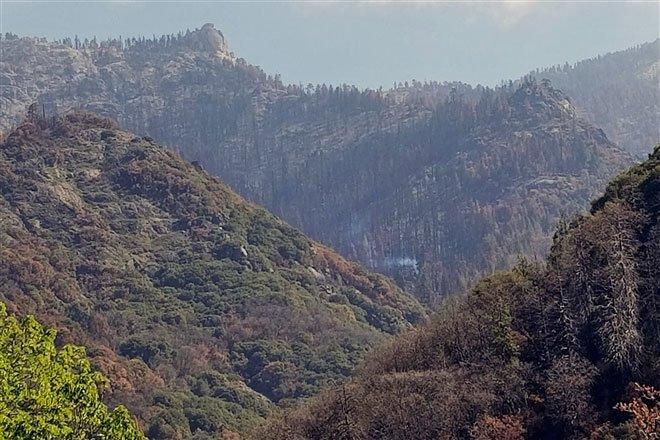 Khói bốc lên trên cây cổ thụ nghìn năm tuổi gần 1 năm sau cháy rừng