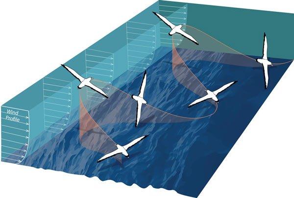 Không động cơ nhưng chiếc tàu lượn này có thể bay đến 881 km/h!