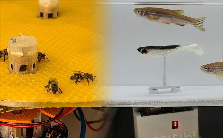 Không tin nổi khi ong và cá từ nay có thể trò chuyện, cãi vã nhau