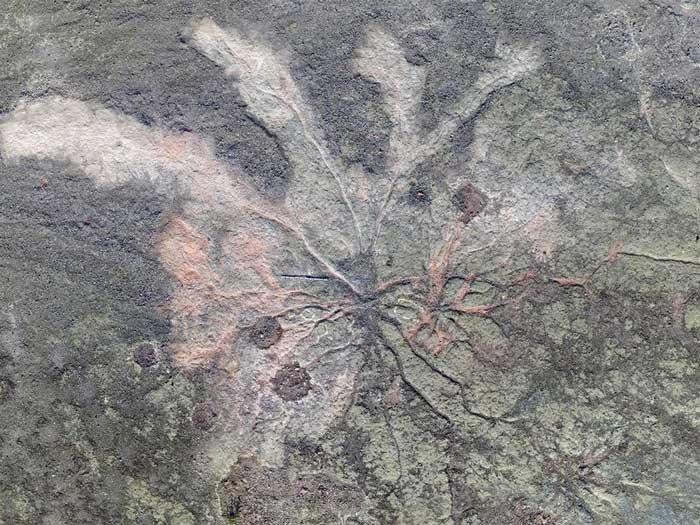 Khu rừng sớm nhất trên thế giới trông như thế nào?