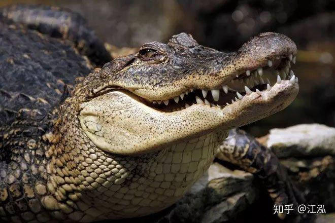 Khủng long bạo chúa Tyrannosaurus dựa vào giác quan thứ sáu để yêu?