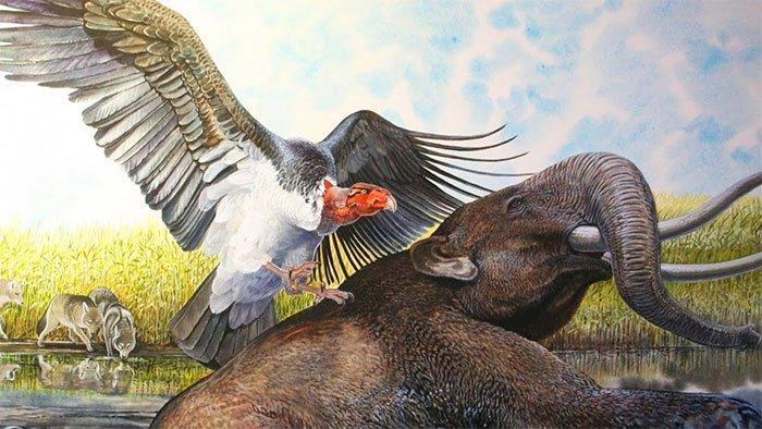 Kinh hãi loài quái điểu khát máu, sải cánh dài 7m, nặng tới 70kg