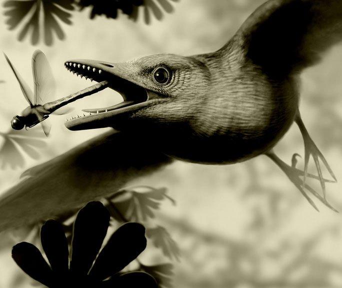Kinh ngạc sinh vật bụng đầy đá quý, sống cạnh khủng long