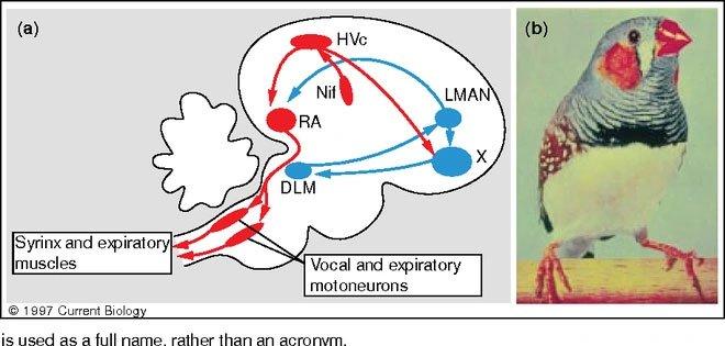 Kinh ngạc với chú vịt có thể nói tiếng người đầu tiên trên thế giới