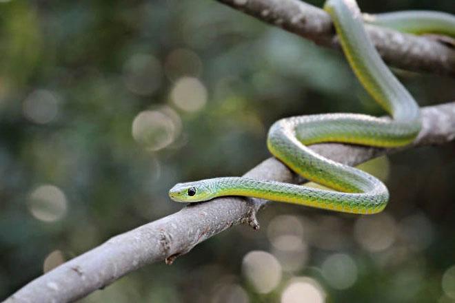 Kinh ngạc với điệu nhảy hành xác đầy khó hiểu của rắn