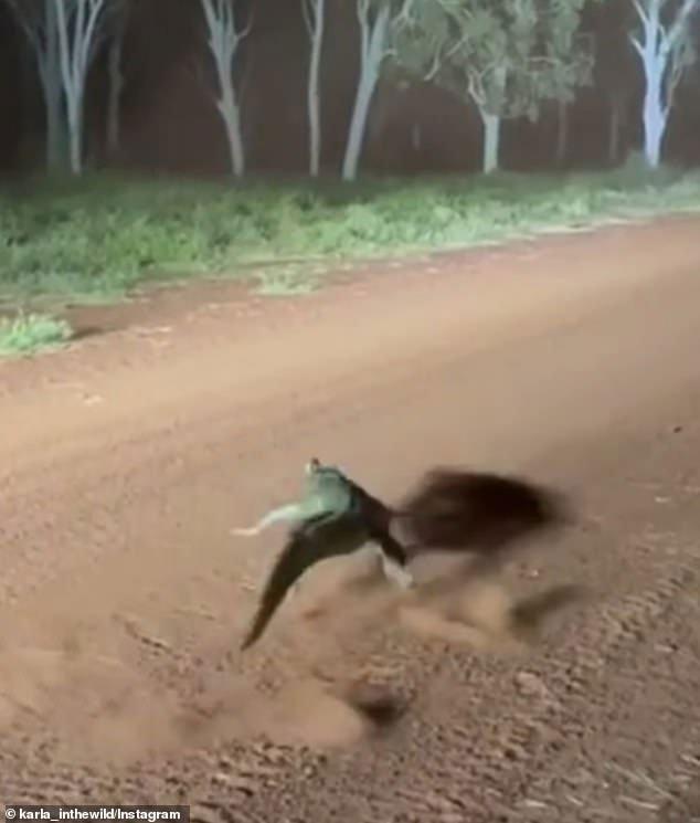 """Kinh ngạc với khả năng """"chạy như bay"""" trên cạn của cá sấu"""