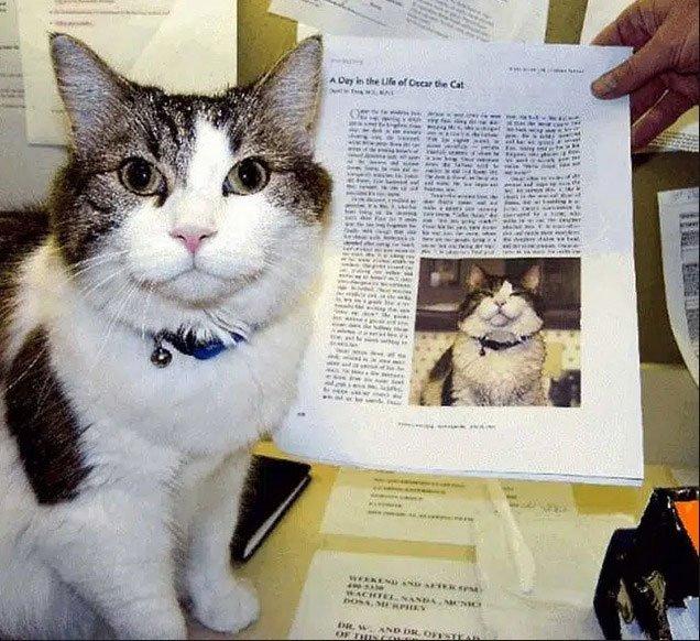Kỳ lạ chú mèo có khả năng báo tử, nằm cạnh ai là người đó qua đời sau 2 tiếng