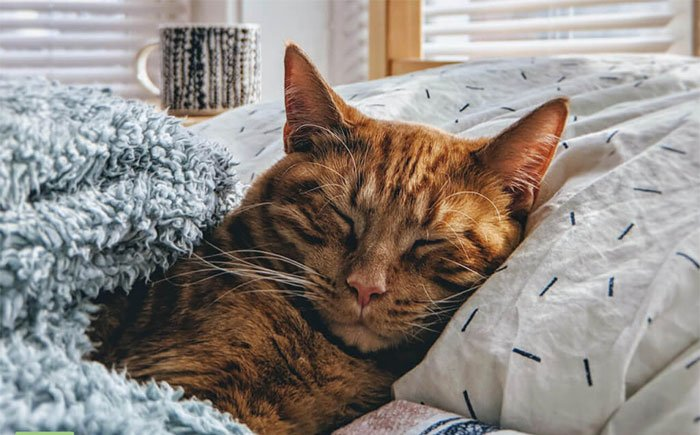 Kỹ năng xã hội của loài mèo quá kém để có thể trung thành