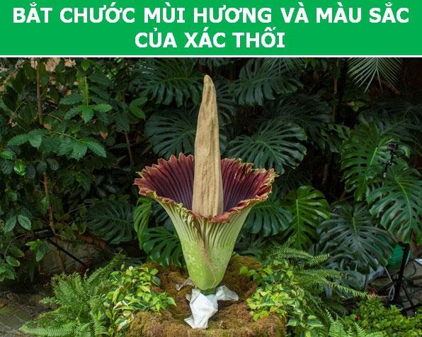 Kỳ thú những chiêu trò được thực vật sử dụng trong quá trình sinh sản