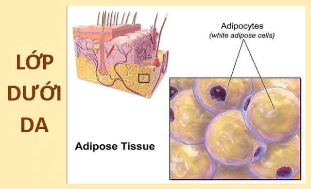 Là cơ quan lớn nhất và là thứ giúp chúng ta tồn tại, lớp da có cấu tạo như thế nào?