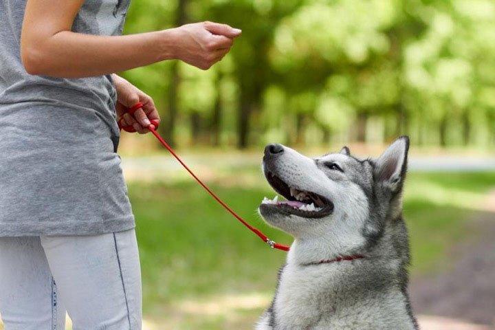 La mắng chú chó nhà bạn có thể dẫn đến những hệ quả đau lòng về lâu dài