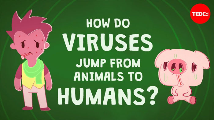 Làm cách nào mà virus có thể nhảy từ động vật sang người?