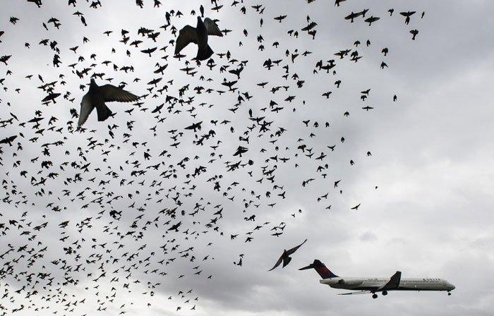 Làm cách nào ngăn chim trời tấn công chim sắt ở các sân bay?