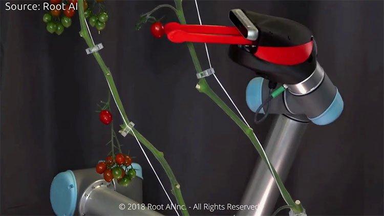 Làm nông bằng robot độc lạ, đỉnh cao của nông dân