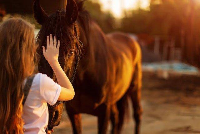 Làm sao biết một con vật đang vui mừng nếu nó không có đuôi để vẫy?