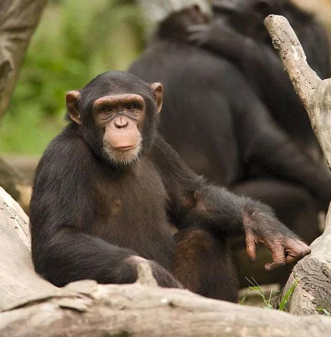 Làm sao chúng ta biết được loài động vật nào thông minh nhất thế giới?