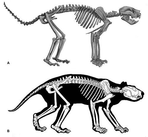 Lần đầu tiên tái tạo hoàn chỉnh bộ xương sư tử túi thời tiền sử