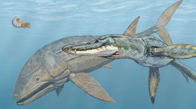 Leedsichthys: Máy hút bụi của biển cả Kỷ Jura từng bị hiểu nhầm là khủng long