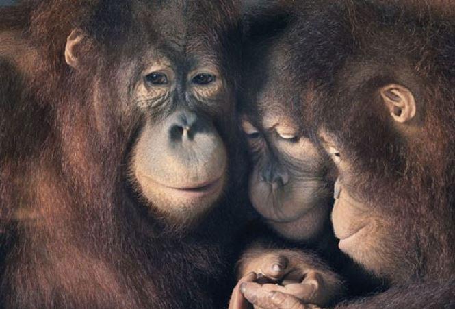 Liệu động vật có cảm xúc giống như con người?