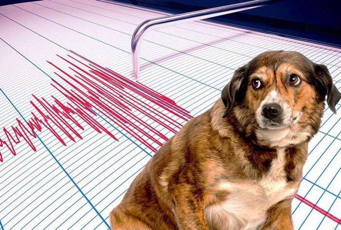 Liệu động vật có thể dự đoán được động đất?