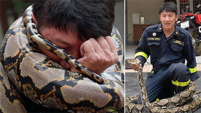 Lính cứu hỏa Thái Lan chỉ cách ứng phó khi bị trăn siết cổ