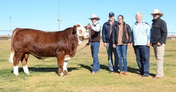 Lộ diện chú bò đẹp và đắt nhất thế giới trị giá gần tỷ đồng