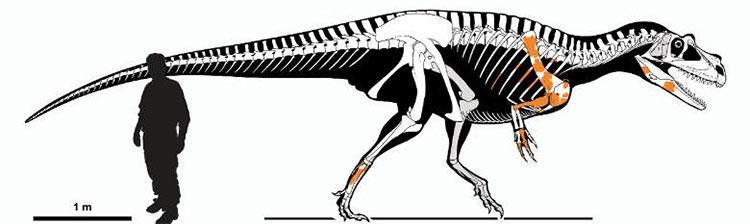 Lộ diện loài khủng long ăn thịt cổ xưa nhất từng tồn tại, dài 7,5m và nặng 1 tấn