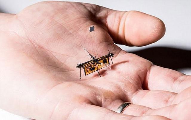 Lộ diện loài robot siêu nhỏ chỉ nhẹ như… que tăm, có thể bay được