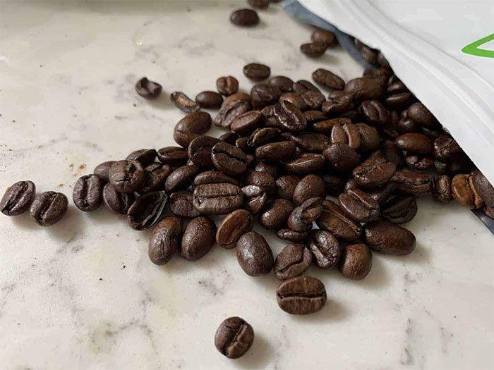 Loại cà phê độc lạ được làm từ phân chim, có giá khoảng 1.000 USD/kg
