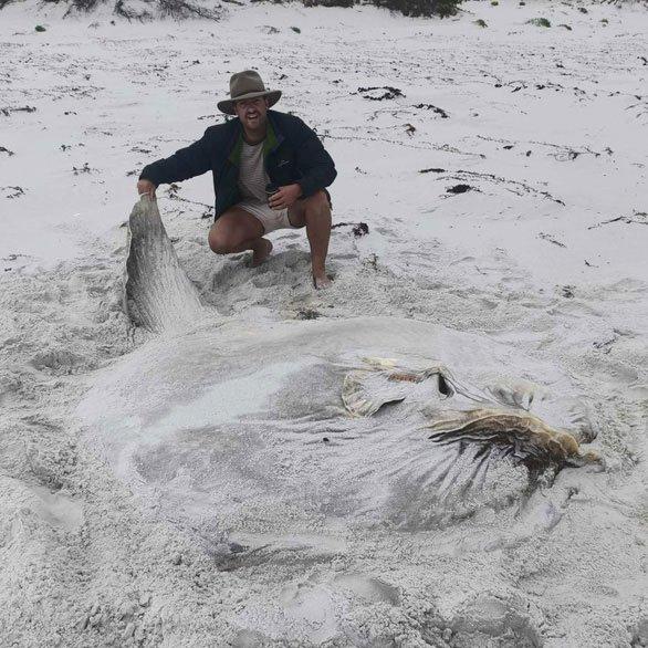 Loài cá quái vật nặng hàng tấn và siêu lười