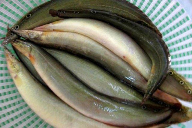 Loại cá vừa ngon lại rất tốt cho gan luôn sẵn có ở chợ Việt