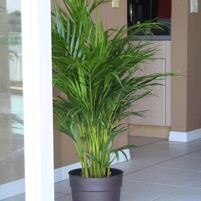 Loại cây trồng giúp căn nhà mát mẻ ngày nắng nóng