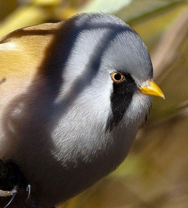 Loài chim có hình dáng ngộ nghĩnh sở hữu 1 tuyệt kỹ làm xiếc siêu đẳng
