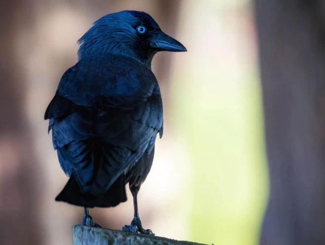 Loài chim có thể nhận biết được ai là người nguy hiểm