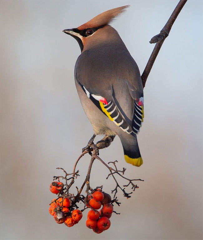 Loài chim cực hiếm xuất hiện, 30 nhiếp ảnh cùng săn đón