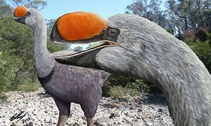 Loài chim không biết bay lớn nhất thế giới cổ đại