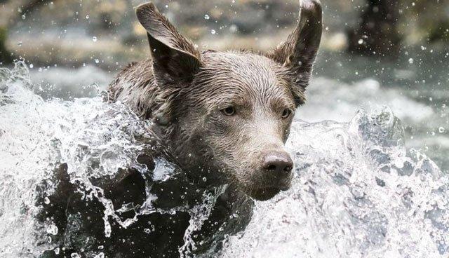 Loài chó có khả năng đặc biệt chưa từng được biết trước đây