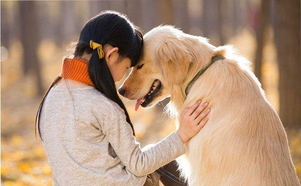 Loài chó có thật sự hiểu được những gì bạn nói?