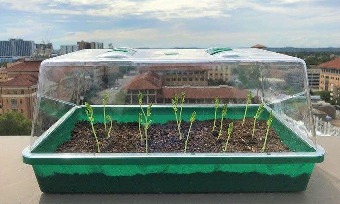 Loại đất mới có thể tự tướinước cho cây trồng